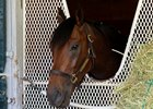 Nyquist the day after his April 23 work at Keeneland