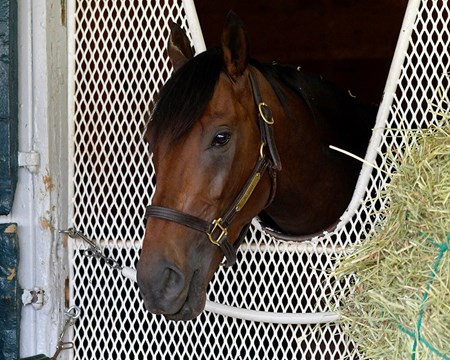 Nyquist  relaxing in his stall at Keeneland in Lexington, Ky., on April 24, 2016.
