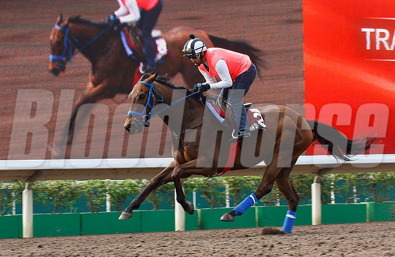 Mongolian Saturday trains at Sha Tin for the Chairman's Sprint Prize April 21, 2016