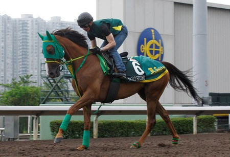 Nuovo Record (JPN) prepares for the AP QEII in Hong Kong April 20, 2016.