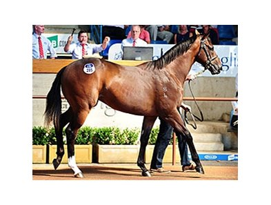 Lot 285, a colt by Redoute's Choice, brought Aus$1,800,000 (about $1,360,930).