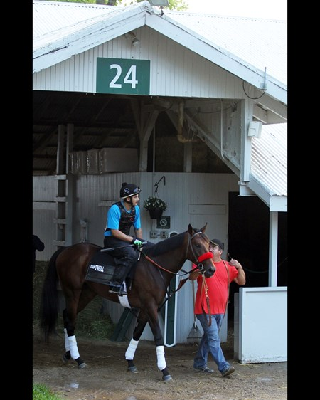 Nyquist at his Keeneland barn April 28, 2016