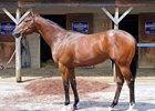 Hip 21 sold for $600,000