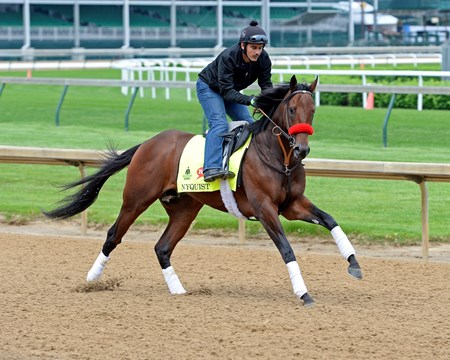 Nyquist at Churchill Downs on May 3, 2016, in Louisville, Ky.