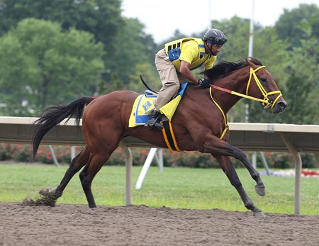 Wildcat Red, with exercise rider Peter Shelton, works on Sunday morning July 20, 2014 at Monmouth Park in Oceanport, N.J.
