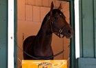 Exaggerator arrives at Pimlico
