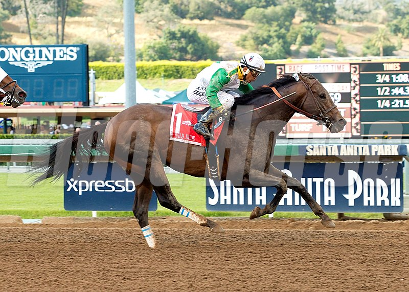 Wild Dude and jockey Rafael Bejarano win the Grade II, $200,000 Kona Gold Stakes, Saturday, May 21, 2016 at Santa Anita Park, Arcadia CA.