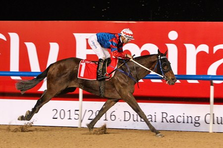 Gun Pit ran second behind Special Fighter in the 2016 Al Maktoum Challenge Round 3