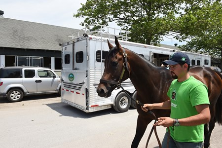 Exaggerator arrives at Belmont Park for the Belmont Stakes May 29, 2016.