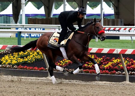 Nyquist is the Preakness Stakes (gr. I) favorite.