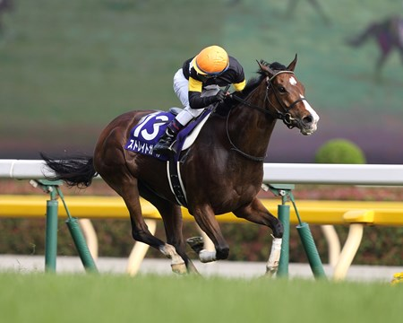 Straight Girl (JPN) wins the Victoria Mile in Japan May 15, 2016.