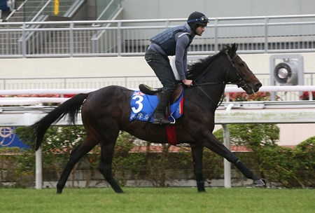 Toormore (IRE) at Hong Kong December 9, 2016