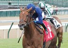 Acapulco Set for Return to Royal Ascot