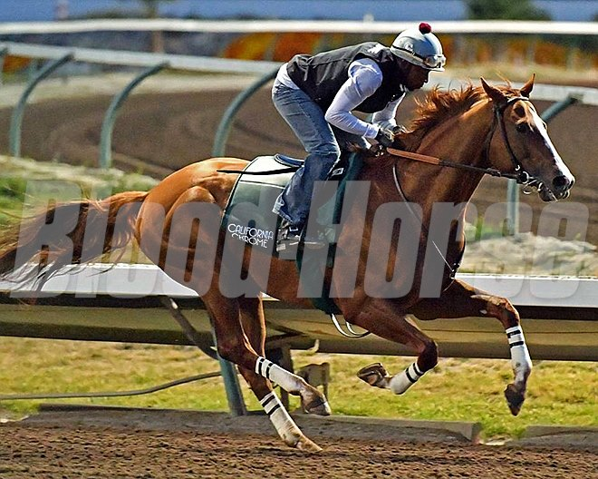 California Chrome - May 21, 2016