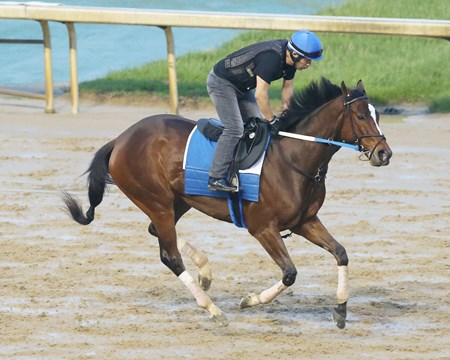 Untapable gallops at Churchill Downs May 1, 2016.