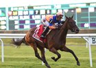 Sea Calisi won the Sheepshead Bay Stakes at Belmont last month over yielding ground.
