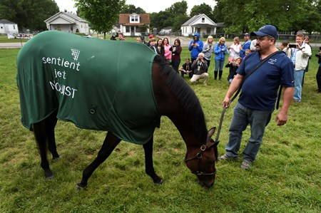 2016 Kentucky Derby winner Nyquist grabs a little snack of grass as he meets the public and the media the day after the Derby in the barn area of Churchill Downs May 8, 2016 in Louisville, KY