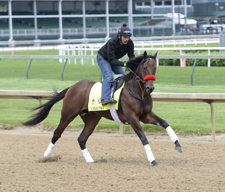 Nyquist preps for the Kentucky Derby at Churchill Downs May 3, 2016.