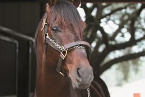 Good Magic Takes Down Bolt D Oro In Juvenile Bloodhorse