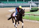Carina Mia on the track at Churchill Downs May 3