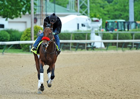Nyquist, Jonny Garcia up, at Churchill Downs Tuesday morning.