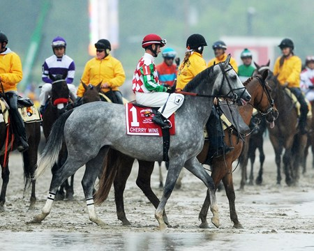 Cherry Wine in the Preakness Stakes post parade