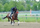 Nyquist on Cruise Control for Preakness