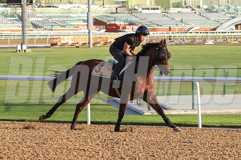 Rich Tapestry goes through his Thursday work on dirt at Meydan before a third try in the Dubai Golden Shaheen.