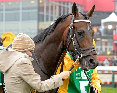 Exaggerator with Kent Desormeaux wins the Preakness Stakes (gr. I) Preakness week at Pimlico in Baltimore, Md., on May 21, 2016.