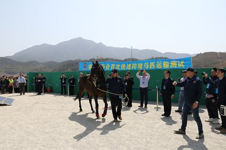 The horses arrived on schedule and in good condition at the temporary stable at the Conghua Training Centre. Successful cross-border movement of horses between Hong Kong and Mainland China marks major milestone in the development of the Conghua Training Centre in Guangzhou