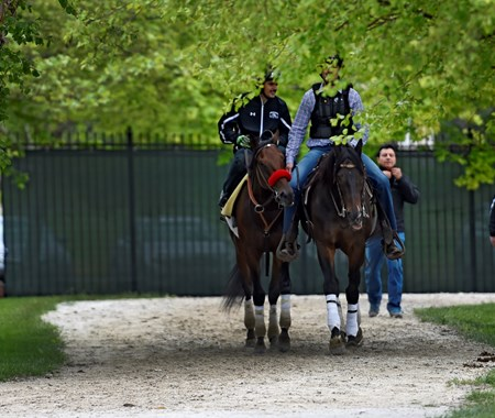 Nyquist out for his exercise at Pimlico Race Course Thursday May 19, 2016.  Photo by Skip Dickstein