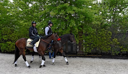 Nyquist out for his exercise at Pimlico Race Course Thursday May 19, 2016.