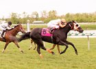 Ben's Cat Victorious in Return at Laurel