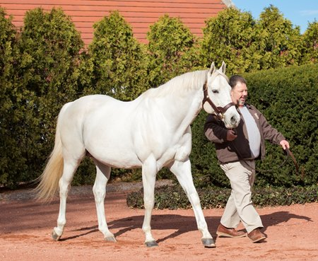 Tapit at Gainesway