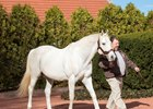 Tapit Clears $100M Mark in Progeny Earnings