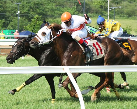 Belterra Stakes Dead Heat Follows Churchill Bloodhorse