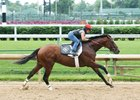 Brody's Cause working at Churchill Downs May 28