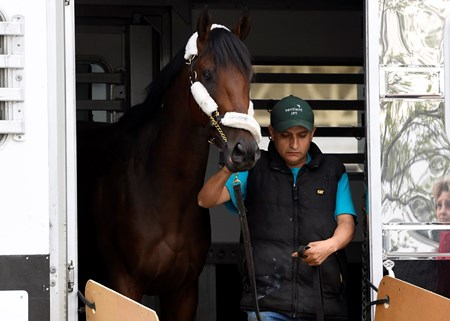 Nyquist arrives at Pimlico - May 9, 2016