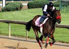 Mokat galloping at Churchill Downs May 2