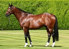Frankel's Stud Fee Held at £125,000