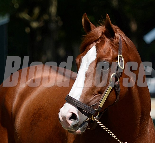 Shackleford enjoys his first full day at the Saratoga Race Course in Saratoga Springs, N.Y. August 3, 2012.