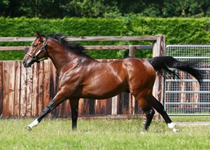 Frankel currently stands at Banstead Manor Stud