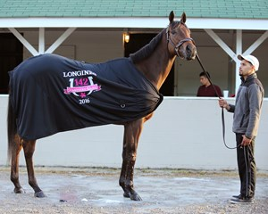 Cathryn Sophia, the morning after her 2016 Kentucky Oaks victory