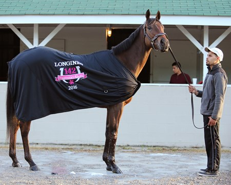 Cathryn Sophia, the morning after her Kentucky Oaks victory.