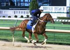 Gun Runner Heavily Favored in Matt Winn