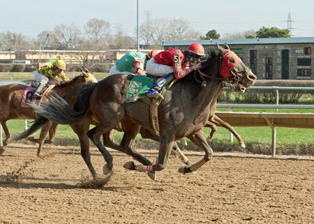 River Bear wins the 2014 Robert S. Molaro Handicap.
