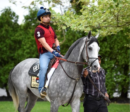Cherry Wine out for his exercise at Pimlico Race Course Thursday May 19, 2016.
