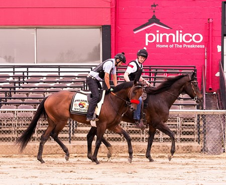 Nyquist trains at Pimlico May 12 for the Preakness Stakes.