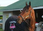 Cathryn Sophia the morning after her victory in the Longines Kentucky Oaks (G1)