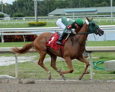 Draft Beer by Tapizar wins race 5 at Gulfstream Park May 26, 2016